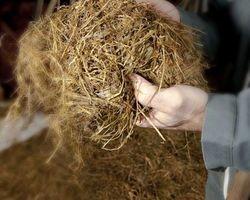 LA FERME DES GREES - MALANSAC - Le tour de la ferme - Tous au foin